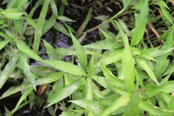 ヤナギの画像 p1_32