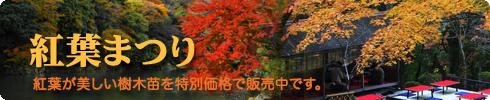 秋の山林樹木