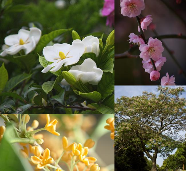 香りのする樹々