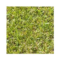 暖地型芝草野芝(種)[雪印種苗]|ガーデン種・苗・球根 ...