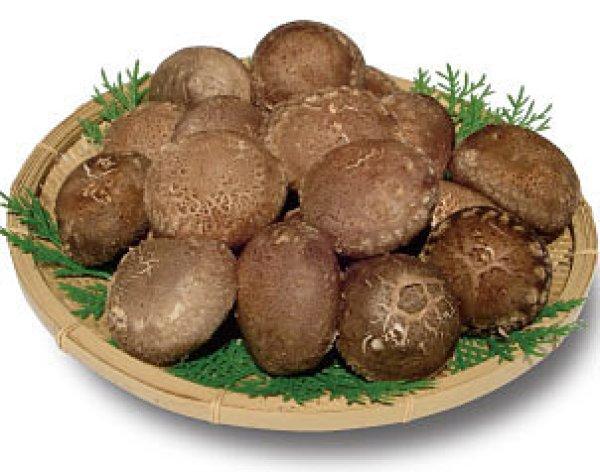 画像1: 旬の本生 原木栽培ジャンボしいたけ 450g (1)