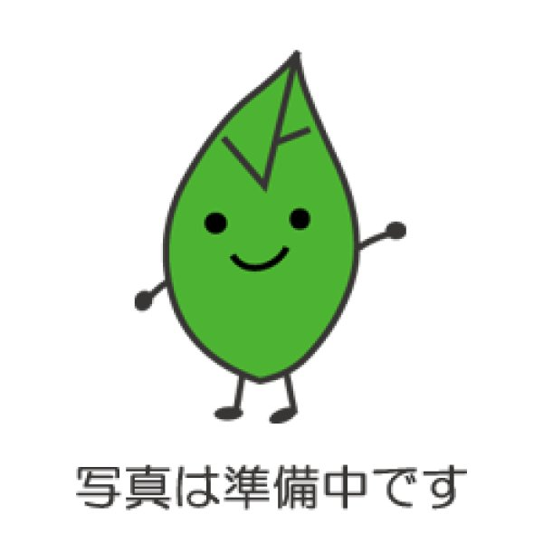 画像1: ザイフリボク(采振り木)苗 (1)