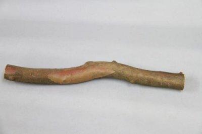 画像1: 小物加工用 令法(リョウブ)原木