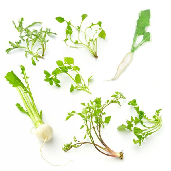 画像1: 春の七草5苗+2種子セット (1)