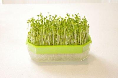 画像3: スプラウトもやし栽培容器