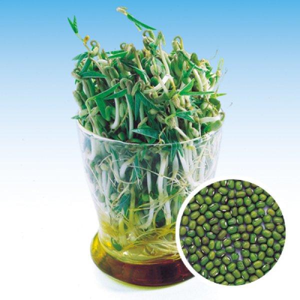 画像1: 緑豆(もやし種) (1)