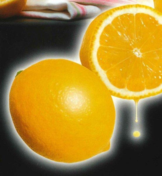 画像1: レモン21(速成り品種)苗 (1)