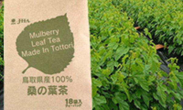 画像1: 国産原料100%桑の葉茶(TB) (1)