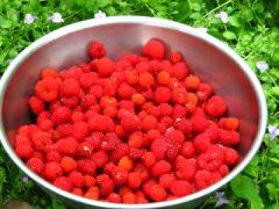 画像3: クサイチゴ(草いちご)種子