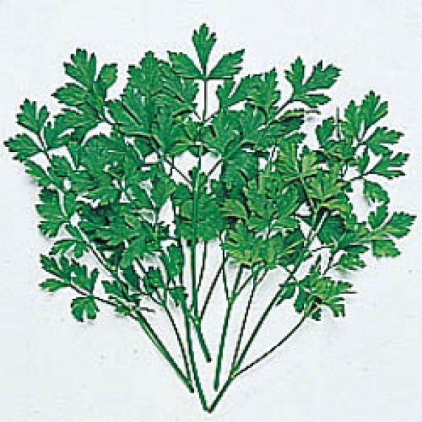 画像1: ハーブ・イタリアンパセリー・種子 (1)