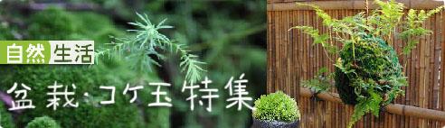 苔玉・盆栽特集