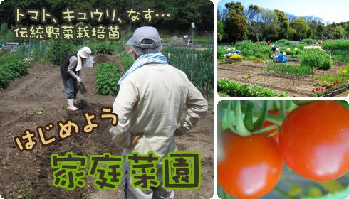 春の家庭菜園特集